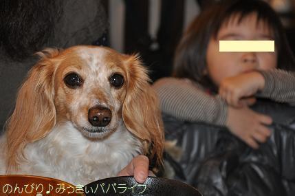 tateyama201402040.jpg