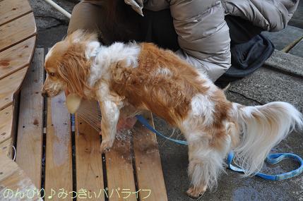 tateyama201402043.jpg