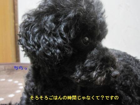 IMG_7708 (448x336)