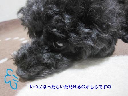 IMG_7709 (448x336)