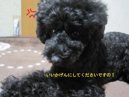 IMG_7707 (448x336)