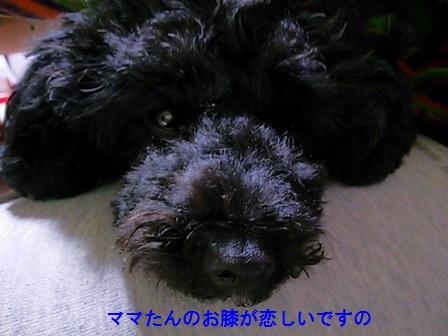 DSC_3659 (448x336)