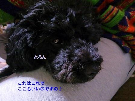 DSC_3666 (448x336)