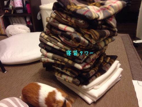 寝袋タワー