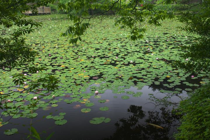 蛇の池201302
