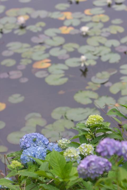 蛇の池201303