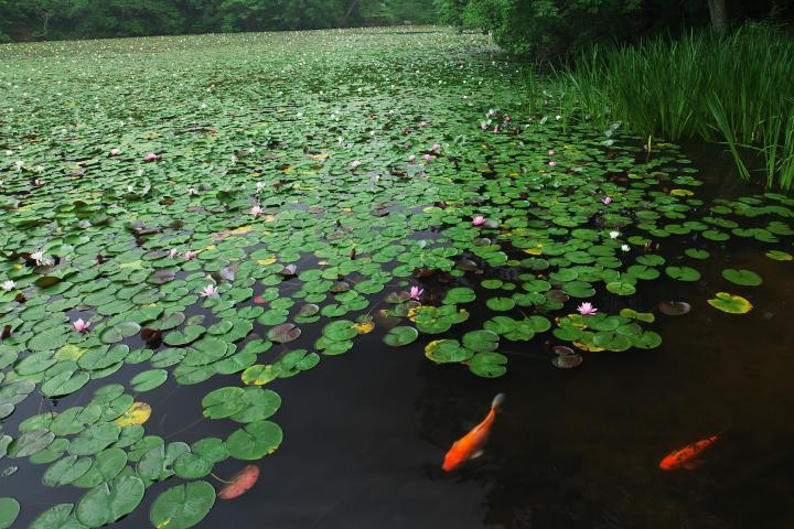 蛇の池201304