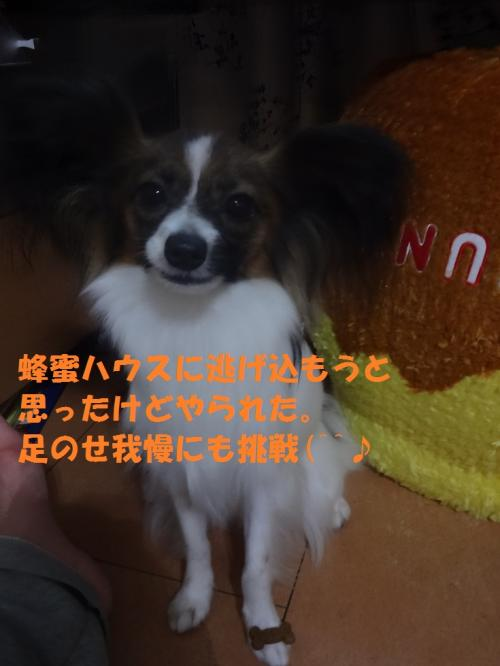 陷り惧_convert_20130520222932