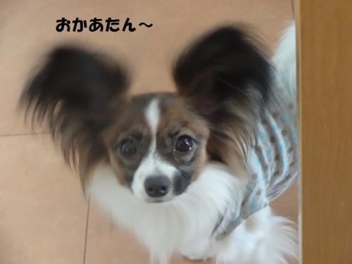 縺翫°縺ゅ◆繧点convert_20130524233809