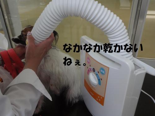 荵セ縺九↑縺Юconvert_20130527203715