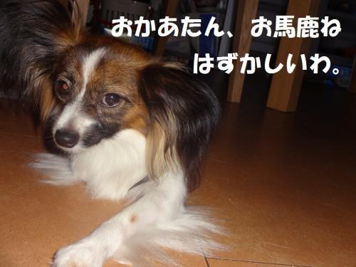 縺企ヲャ鮖ソ_convert_20130530061617