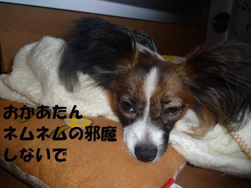 繝阪Β繝阪Β_convert_20130606081754