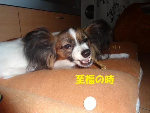 閾ウ遖柔convert_20130611015814