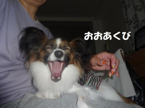 縺ゅ¥縺ウ_convert_20130613171926