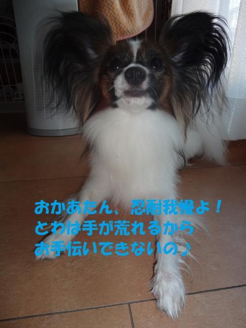 豢玲ソッ_convert_20130708072453