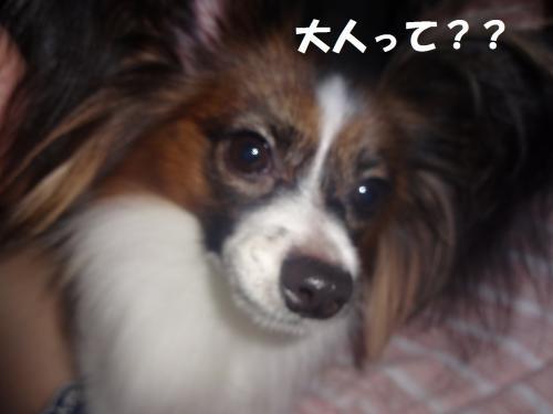 螟ァ莠コ_convert_20130914074605