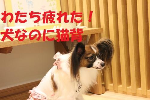 迪ォ閭契convert_20130923074934