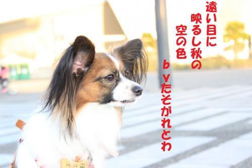 遘玖牡_convert_20131102224010