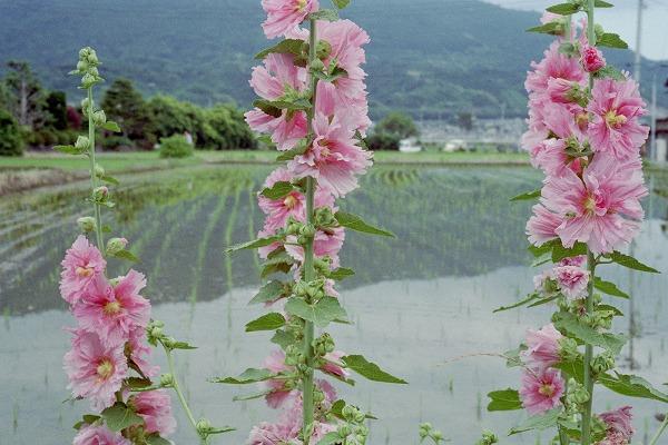 kaisei130608himatic017.jpg