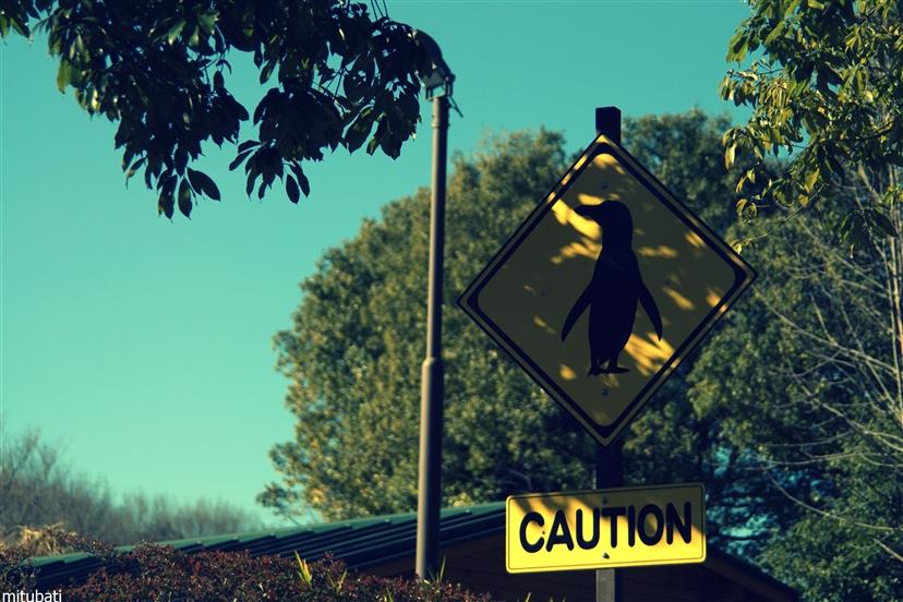 ペンギンの標識