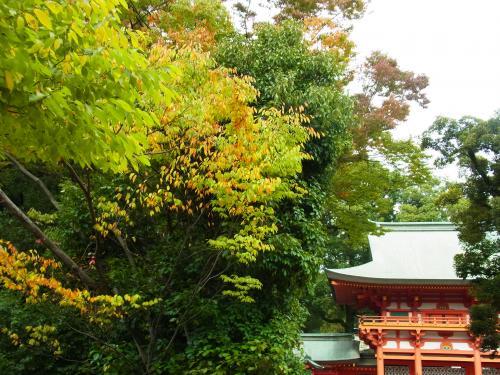131102-201氷川神社(S)