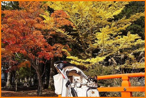 高野山00647