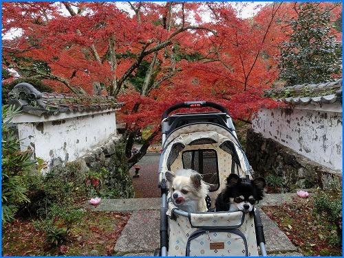 神蔵寺2022