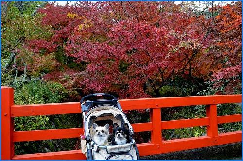 神蔵寺3557
