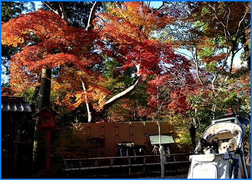 鍬山神社3612