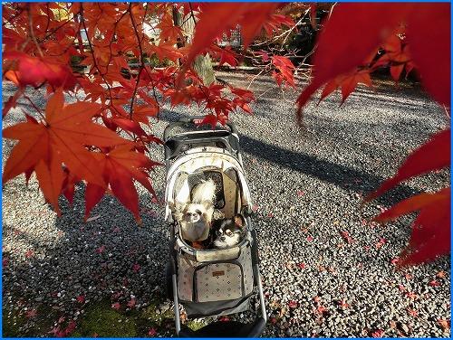 鍬山神社2036