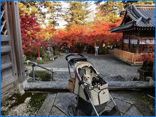 鍬山神社2040