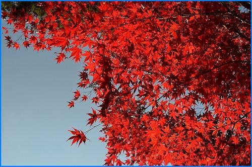 鍬山神社3621