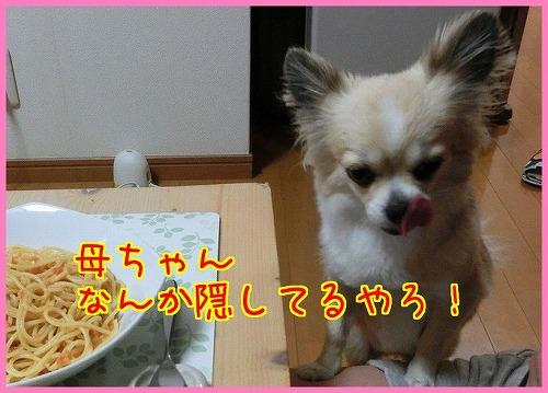 CIMG1189.jpg