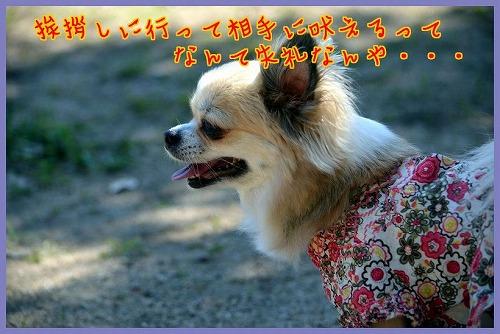 DSC_3015.jpg