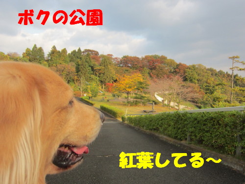 IMG_0727.jpg