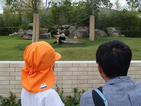 パンダを見る親子