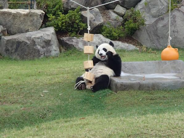 遊具で遊ぶパンダ