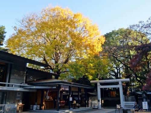 10乃木神社紅葉 (1200x900)