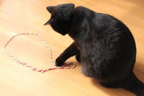 猫転送装置 5