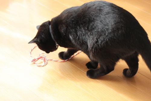猫転送装置 4
