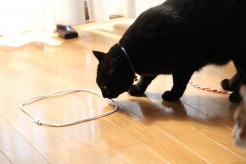 猫転送装置 2
