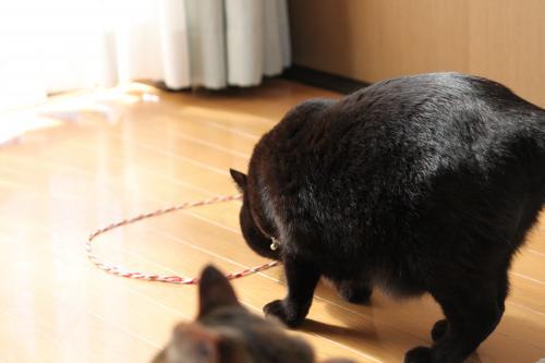 猫転送装置 1