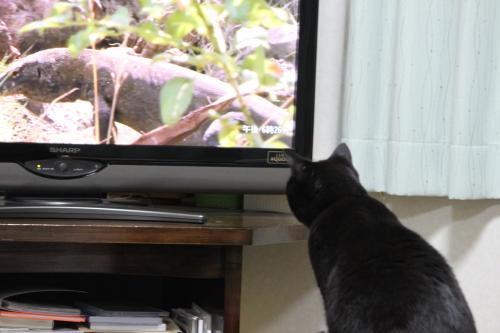 テレビっこ 1