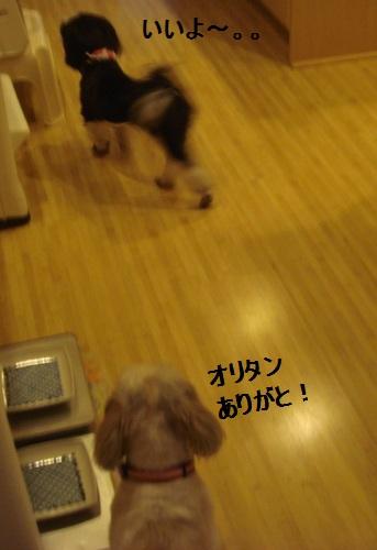 DSC04249moji.jpg