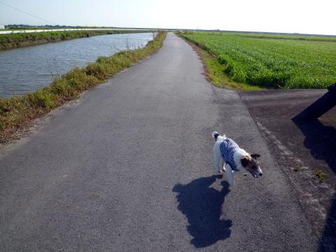 散歩(3)
