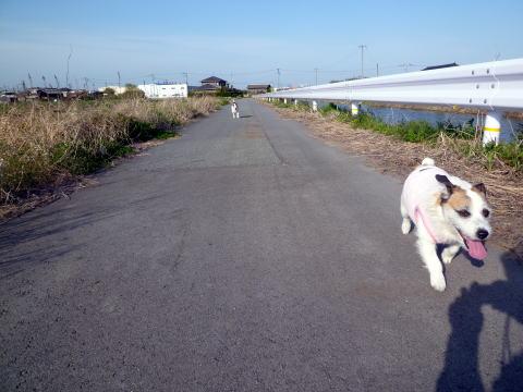 散歩(5)