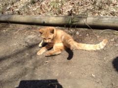 赤城案内猫3