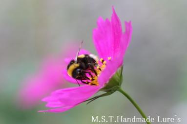 コスモスとハチ
