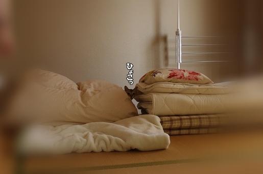 130606-3シンちゃん