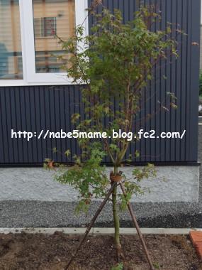 IMGP1490.jpg